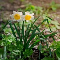 Цветы :: D. Matyushin.