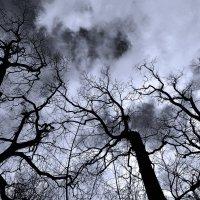 Dark day :: alexander zvir