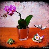 Орхидея, бабочка и лягушка :: Nina Yudicheva