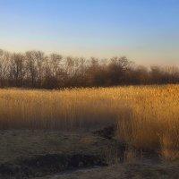 Камышовый пейзаж :: M Marikfoto