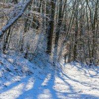 И опять пришла зима.. :: Юрий Стародубцев