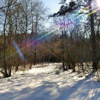 Цветной луч в весеннем лесу :: Милешкин Владимир Алексеевич