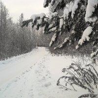 зима.... :: александр дмитриев