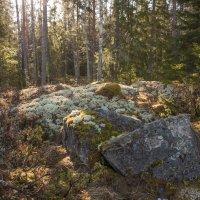 утро в уппландском лесу :: liudmila drake
