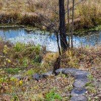 Дорожка к ручью :: Марина Ломина