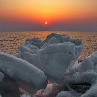 роза последнего льда :: Ingwar
