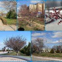 Весна в Актау :: Анатолий Чикчирный