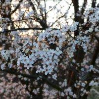 весна :: Ольга Богачёва