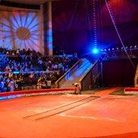 Цирк :: Света Кондрашова