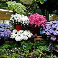 цветочный рынок :: Александр Корчемный