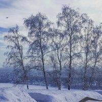 Февральская лазурь... :: Альмира Юсупова