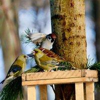 лесная сборная) :: linnud