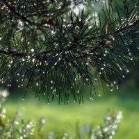 После дождя :: Владимир Щеглов