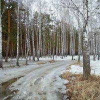Весенние дороги в лесу. :: Мила Бовкун