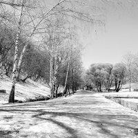 Чёрно - белая весна. :: Маргарита ( Марта ) Дрожжина