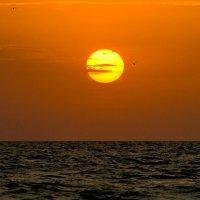 Море Азовское.. :: владимир
