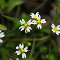 Вот и весна. :: владимир