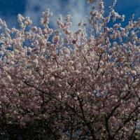Весна :: Dobr
