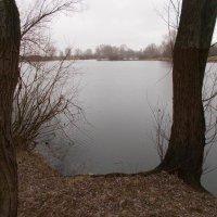 Река Десна мартовская :: Александр Скамо