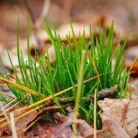 Весна в обнимку с осенью :: Алиса Терновая