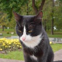 Задумчивый кот в парке :: Сергей Тагиров