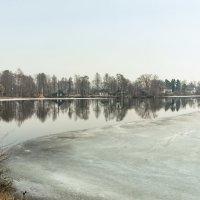 Весна на озере Разлив :: Виталий