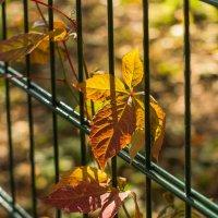 Осень в клетке :: Виталий