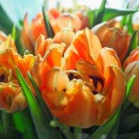Кусочек Весны :: Елизавета Олейник