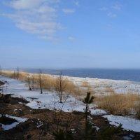 весна на Финском заливе.... :: Валентина Папилова