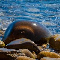 В звуках моря – самая красивая тишина. :: Наталья Александрова