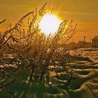 первые шаги весны :: Сергей Розанов