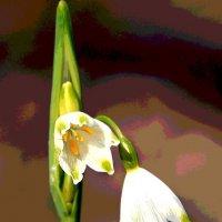Краски весны :: Alexander
