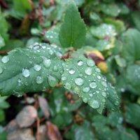 после дождя :: tgtyjdrf