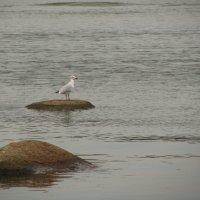 уральская чайка :: tgtyjdrf