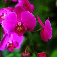 """парк орхидей """" утопия """" :: ALEX KHAZAN"""