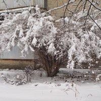 Птички спрятались под деревцем :: Лидия (naum.lidiya)