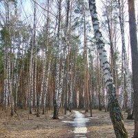 Проталинки в лесу :: Лидия (naum.lidiya)