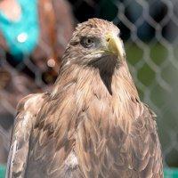 Птица :: Евгений Ломко