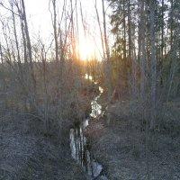 Лесной ручей :: Наталья Полочанка