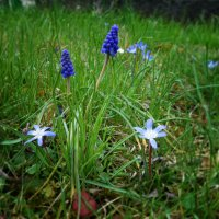 Акварельная Нежность Весны :: Galina Dzubina