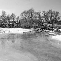 Весна на реке Шерна. :: Ирина Нафаня