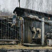 Однажды в деревне :: Александр Ребров