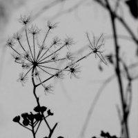 зимнее цветение :: Татьяна Кормилицына