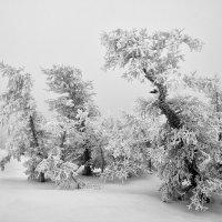 Александр Кожухов - Противостоящие ветрам :: Фотоконкурс Epson