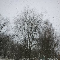 Капризы молодой весны.. :: Алексей Макшаков