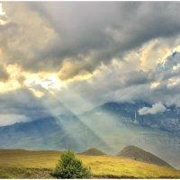Горная поляна. Фиагдонское ущелье. Северная Осетия. :: Олег Стасенко