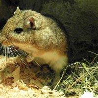 Я мышка-норушка,а вы ? :: nadyasilyuk Вознюк