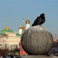 Насиженное место :: Александр Шихин