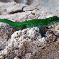 зелёная на песке :: vg154