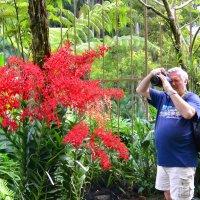 В саду орхидей. Сингапур :: Юрий Белоусов